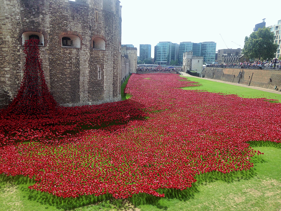 history-of-remembrance-poppies